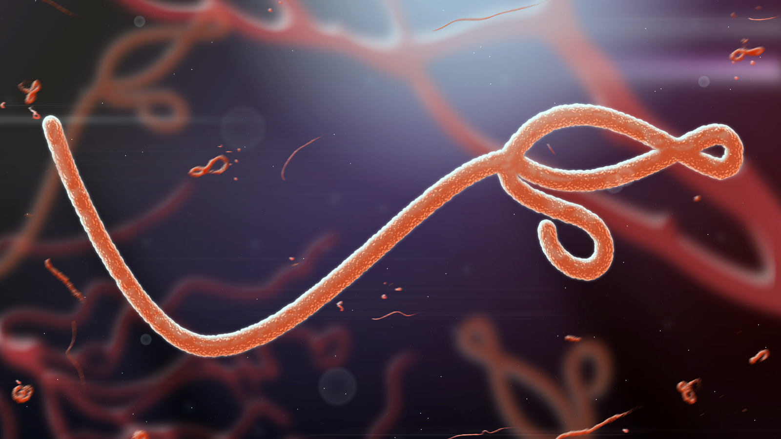 échographie contre le virus Ebola